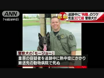 職務中の警察犬、熱中症で「殉職...