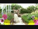 【yu!k@(ゆいか)】さようなら、花泥棒さん【踊ってみた】 thumbnail