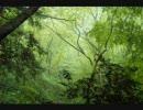 作業用BGM ‐ 森のカフェ