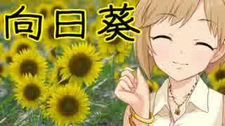 向日葵(ひまわり)