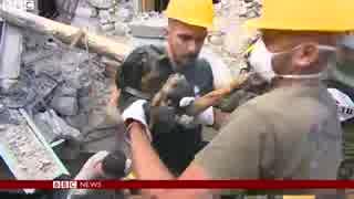 がれき下からペット犬も イタリア中部地震 thumbnail