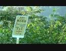 晩夏の秦野 ヤビツ峠・菜の花台