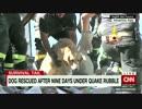 がれきに埋もれ9日間、犬の救出に歓声 イタリア地震 thumbnail