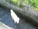 用水路に犬