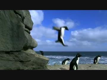 転んだり踏まれたりするペンギン達が可愛すぎる件