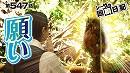 シーサ。の回胴日記_第547話 [by ARROWS-SCREEN]