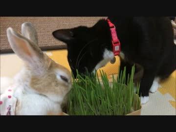 ネコとウサギのもぐもぐサラダバー
