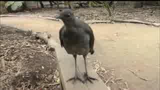 鳴き声が『ビーム光線』の鳥が発見されるにエフェクトを追加してみた