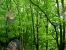 森にゲームのカード落とす自然な音