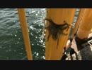 釣り動画ロマンを求めて 2釣目(磯子海づり施設)