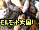 【旅行】スナザメ原田内藤たけぉ牛沢タラチオのフルパワー旅行中編予告