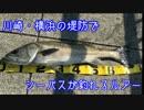 しめじの釣り日記番外編「川崎・横浜の堤防でシーバスオススメルアー」