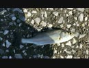 釣り動画ロマンを求めて 4釣目(川崎浮島つり園)