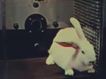 サリンのウサギへの動物実験 by ...