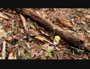 キノコを探す~秋の珍菌編~
