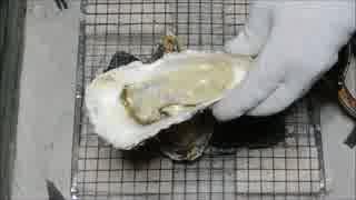 牡蠣 3Lサイズ 北海道【長火鉢とおっさん9】