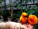 (インコ動画) 掛川花鳥園 年間パスポートの記録 VOL.1