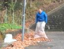 #カツドンチャンネル 自家製の落葉堆肥を作る!