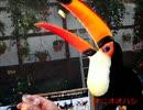 (鳥動画) 掛川花鳥園 年間パスポートの記録 VOL.2