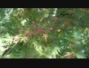 紅葉見に行ってきた時の動画です。