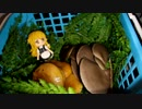 【食菌採取】冬キノコを採って食べる:その1【修正版】