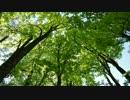 【癒し音楽】自律神経の安定(ヒーリング+小鳥)リラックス・瞑想・睡眠