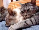 家猫日和 ソファ