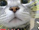 不審者からの電話は、猫が癒します。【きみと雪どけ】 前編