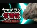 ヤマアラシ最強説の実態に迫る!!