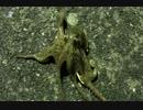 釣り動画ロマンを求めて 17釣目(ふれーゆ裏:夜釣り)