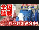 【韓国の鶏が絶望的】 まだまだ続く!3千万羽超え処分中!