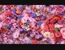 Max Richter - Vivaldi Spring 1