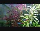 【癒し】13才の「アクアリウム」動画 【水槽】
