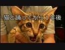 第10位:捨て猫ティガーと踊ろう! あれから1年でここまで大きくなりました!