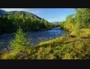 【癒し系BGM】清涼な川の音&ヒーリング(睡眠や瞑想の音楽)