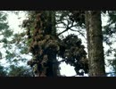 メキシコの世界遺産・Mariposa Monarca【モナルカ蝶】
