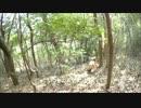 【閲覧注意】 猟犬日誌 猟師と猟犬の猪猟 Part26