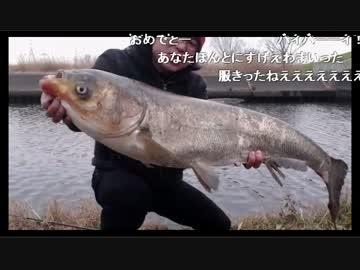 2017/01/20】巨大魚!中国四大家...