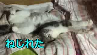 【わーい!】この猫はねじれて寝るフレンズなんだね!すごーーい!!