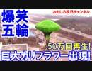 【韓国お笑い平昌五輪】 海外メディアが大酷評!10日間で計50万回再生!