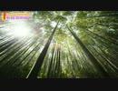 【癒し・睡眠用BGM】癒やしのヒーリングミュージック 疲労回復【α波】
