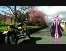 今年こそ春を先取り!河津桜ツーパートⅡ【結月ゆかり車載】