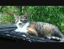 (´・ω・`) 野良ネコ・・・なんかいいね~♪