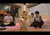第38位:【試聴】『ねころび男子』14ねころび≪前編≫ thumbnail