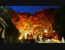 【耳かき音】秋の夜にゴリゴリ耳かき