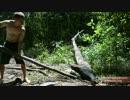 ホモと見る植林.PrimitiveTechnology