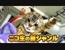 【生CG劇場】猫のテトラちゃん登場!【バーチャル生主】