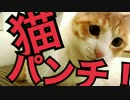 【かわいい!】超光速猫パンチをする猫!