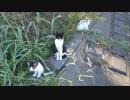 「帰らないでー」母猫が子猫をぞろぞろ連れてきた