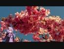 【ゆかり車載】2月19日に河津桜を見に行っ